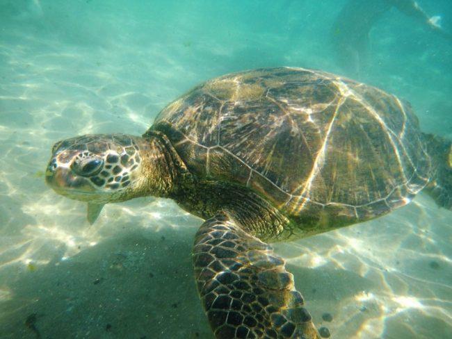 Mi experiencia en la isla de Maui, Hawaii | Viajando con Fran