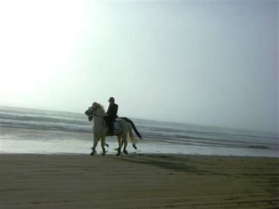 caballo+en+playa+california