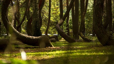 10 bosques increibles