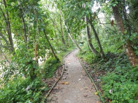 camino+selva+dominicana día de crucero