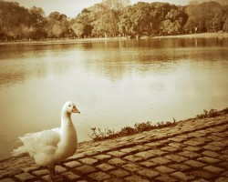 bosques+palermo+buenos+aires+lago+pato