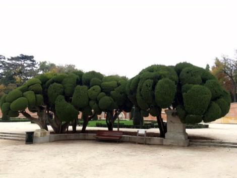 arboles+parque+el+retiro+madrid