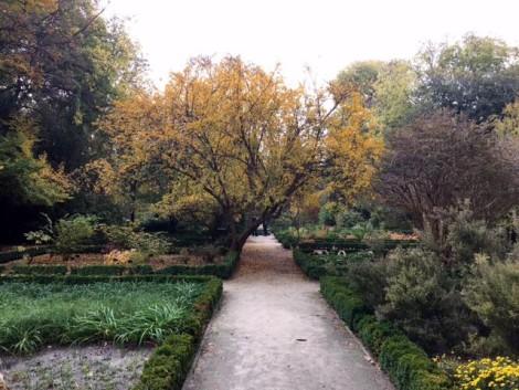 jardin+botanico+madrid