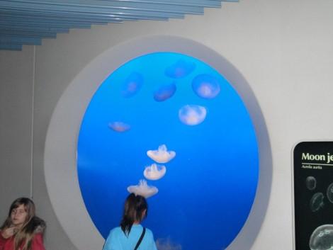 acuario+monterey+california
