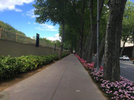 flores+calle+estambul+avenida estambul la puerta oriente