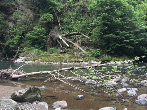 rio+arbol+mitrala+georgia parque nacional en georgia
