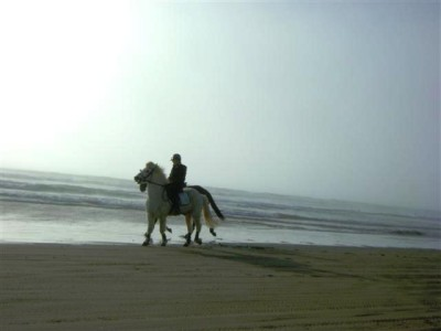 caballo+en+playa+california