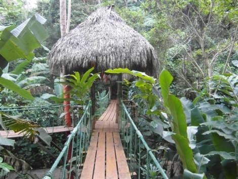 camino+colgante+selva+treehouse día de crucero