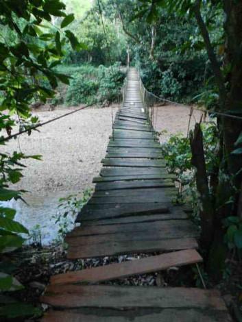 puente+colgante+selva+dominicana día de crucero