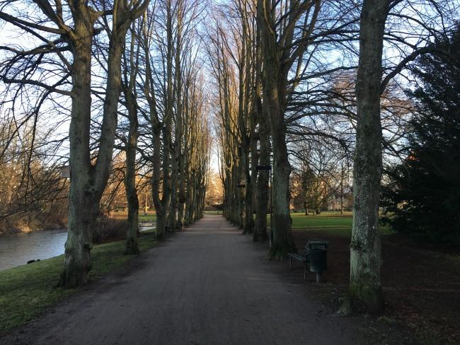 arboles+parque+cruzar+malmo