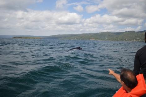 ballenas+mar+republica+dominicana