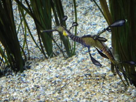 horse+monterey+bay+aquarium