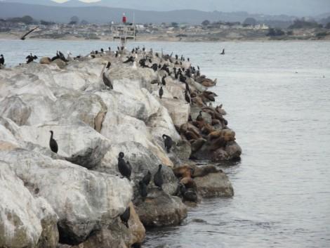 lobos+monterey+california+rocas visitar monterey california