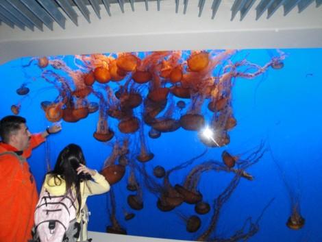 monterey+bay+fish+jellyfish+aquarium
