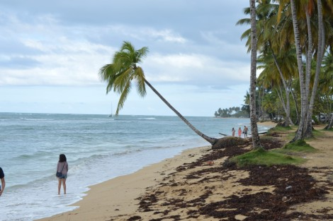 playa+palmera+republica+dominicana