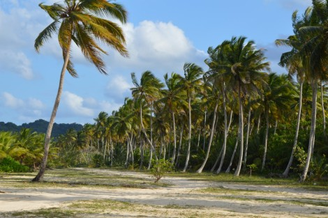 playa+palmeras+arqueadas
