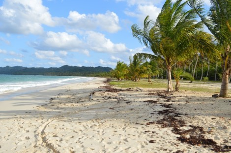 playa+rincon+republica+dominicana