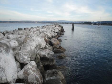 punta+rocas+lobos+marinos+monterey+california visitar monterey california