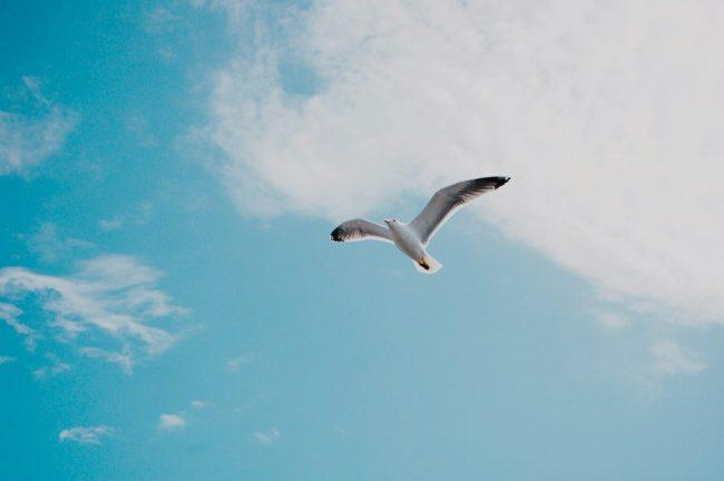 dejar ir alguien volar